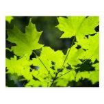 Hojas del verde en las maderas tarjeta postal