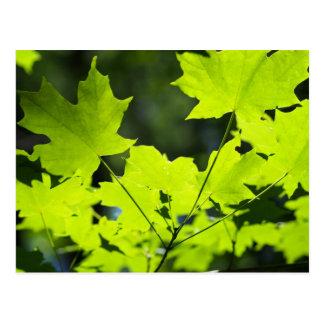 Hojas del verde en las maderas postales