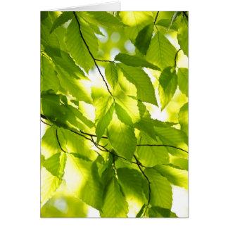 Hojas del verde en primavera felicitación