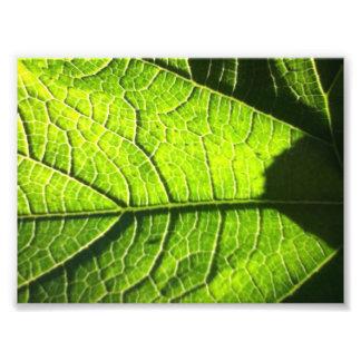Hojas del verde fotografía