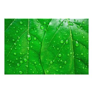 Hojas del verde fotografías
