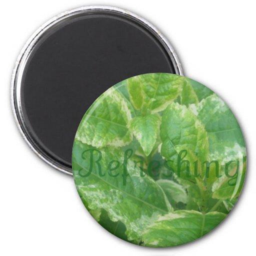 Hojas del verde imán para frigorifico