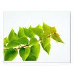 Hojas del verde invitación 10,8 x 13,9 cm