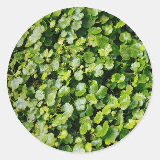Hojas del verde etiquetas redondas