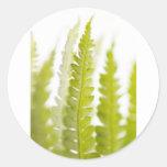 Hojas del verde, planta verde, plantas, tierra etiquetas redondas