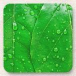Hojas del verde posavaso