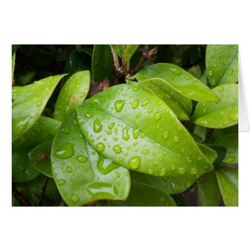 hojas del verde tarjeta de felicitación