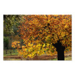 Hojas doradas del castaño en otoño en la sierra fotografías