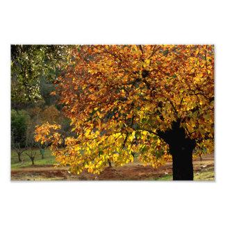 Hojas doradas del castaño en otoño en la sierra fotografias