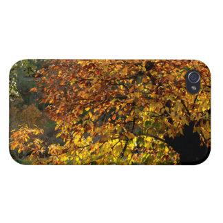 Hojas doradas del castaño en otoño en la sierra iPhone 4 carcasas