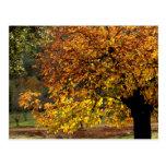 Hojas doradas del castaño en otoño en la sierra tarjeta postal