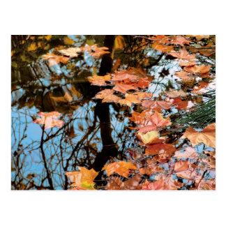 Hojas en el lago postal