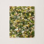 Hojas en hierba rompecabezas con fotos