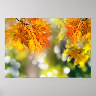 Hojas en las ramas en el bosque del otoño póster