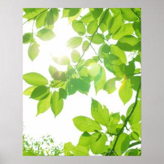 Hojas en luz del sol, primer del verde póster