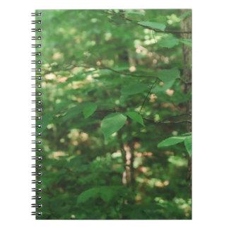 Hojas en un árbol… Cuaderno de la fotografía de