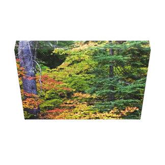 Hojas en un bosque impresiones en lona estiradas