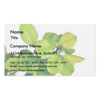 Hojas frescas del verde en el fondo blanco tarjetas de visita