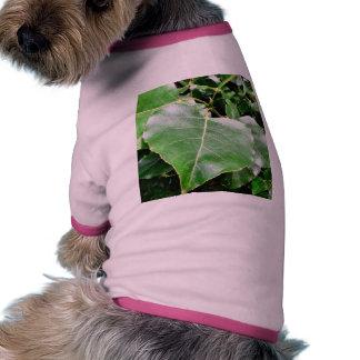 Hojas grandes del verde en Forrest Camisetas De Mascota