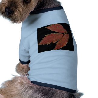 Hojas hermosas de la hiedra venenosa ropa para mascota