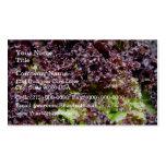 Hojas hidropónicas de la lechuga tarjetas de visita