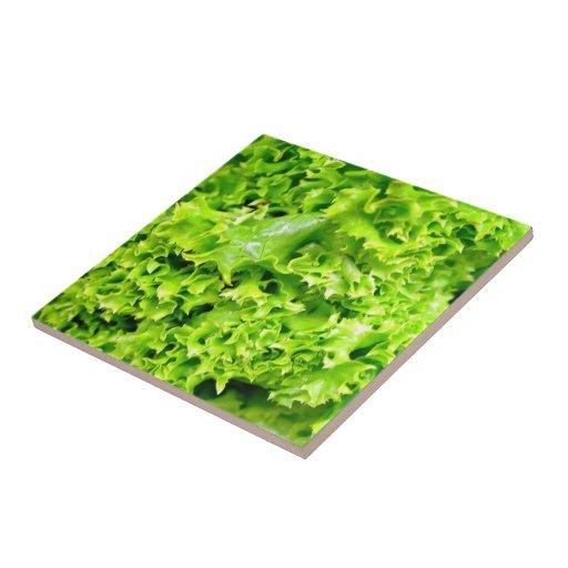 Hojas hidropónicas verdes de la lechuga tejas  ceramicas