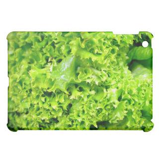 Hojas hidropónicas verdes de la lechuga