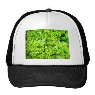 Hojas hidropónicas verdes de la lechuga gorros bordados