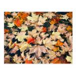 Hojas, hojas, hojas tarjetas postales