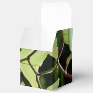 Hojas mojadas del verde cajas para regalos