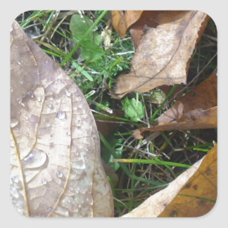hojas colcomanias cuadradas personalizadas
