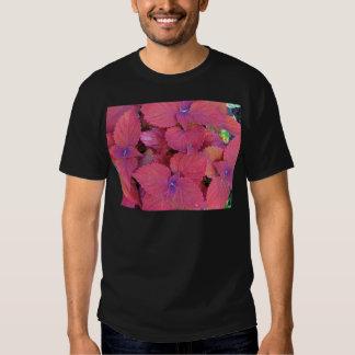 Hojas púrpuras rojas del coleo playera