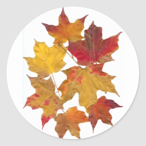 Hojas que caen del otoño etiqueta redonda