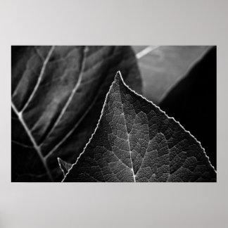 hojas que son posters