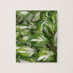 Hojas rayadas verdes y blancas del hosta