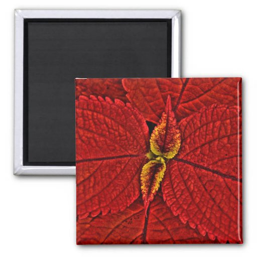 Hojas rojas del coleo - imán