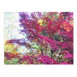 Hojas rosadas y de la púrpura soleadas postal