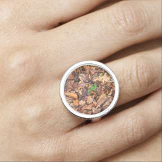 Hojas secas del otoño y tréboles verdes anillos