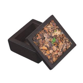 Hojas secas del otoño y tréboles verdes caja de joyas de calidad