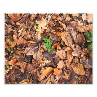 Hojas secas del otoño y tréboles verdes cojinete