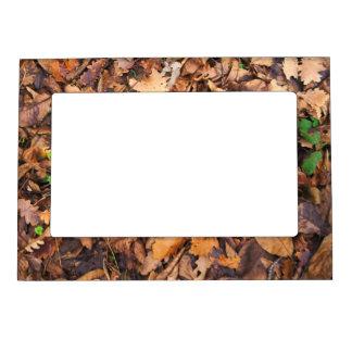 Hojas secas del otoño y tréboles verdes marcos magneticos de fotos