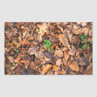 Hojas secas del otoño y tréboles verdes pegatina rectangular