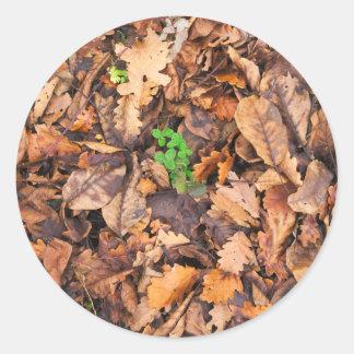 Hojas secas del otoño y tréboles verdes pegatina redonda