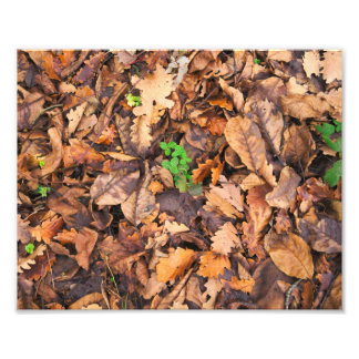 Hojas secas del otoño y tréboles verdes fotografía