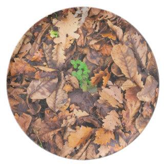 Hojas secas del otoño y tréboles verdes platos