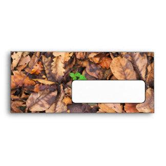 Hojas secas del otoño y tréboles verdes sobres