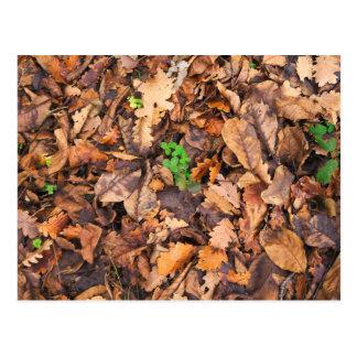 Hojas secas del otoño y tréboles verdes tarjetas postales
