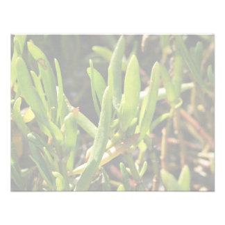 Hojas suculentas de la planta de la playa anuncio