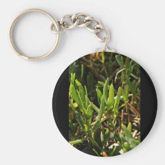 Hojas suculentas de la planta de la playa llavero redondo tipo pin
