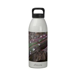 Hojas verde oscuro y del rojo botella de agua reutilizable